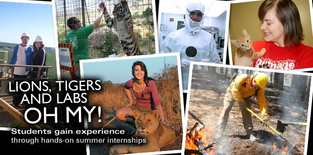 Lions, Tigers and Labs Oh My!: Students gain expereince through hands-on summer internships