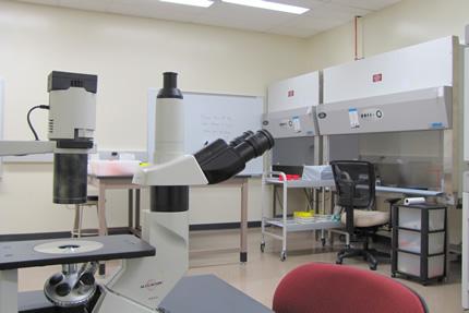 Laboratories Nanoscale Sciences Natural Sciences